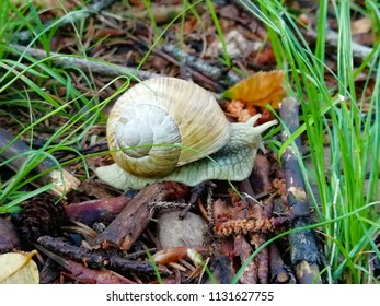 white snail on the ground