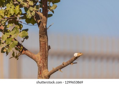 White snail on a top of branch of the tree at blue sky background