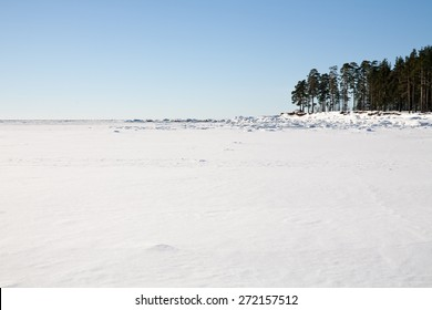 white snow field of frozen sea bay and piece of coast with pine trees