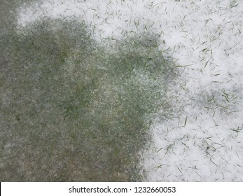 white snow and ice on green grass lawn