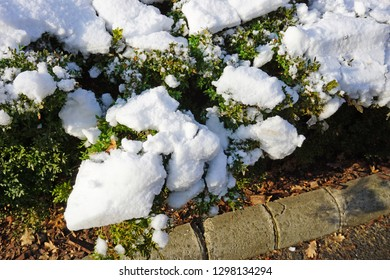 White snow on the green bush