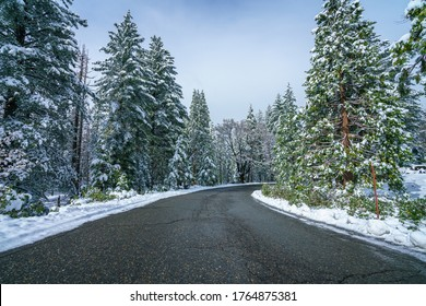 white snow on the trees at the road in yosemite national park