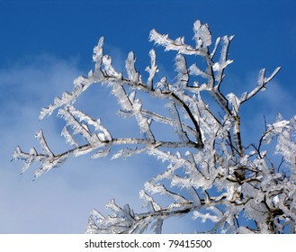 white snow tree in winter