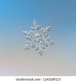 White snowflake glittering on light blue background. Macro photo of real snow crystal: stellar dendrite with six long, elegant arms, glossy relief surface, fine hexagonal symmetry and ornate shape.