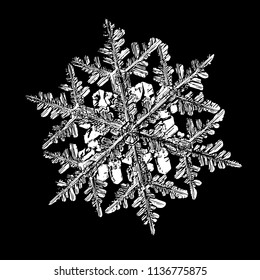 White snowflake on black background. This illustration based on macro photo of real snow crystal: big stellar dendrite with fine hexagonal symmetry, complex, elegant shape and six thin arms.