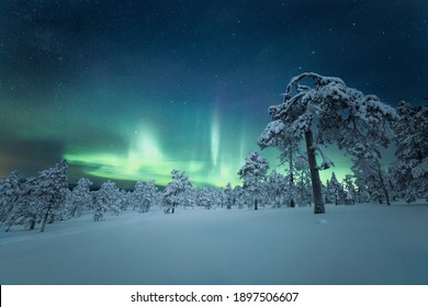 in a white snowy area are green frozen trees in winter season surrounded by blue starry astronomy galaxy and greenish coloure northern lights in sky at a night time in nature looking very beautiful