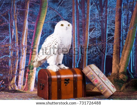 White Snowy Owl Standing