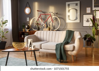White sofa with a wool blanket, wooden coffee table and red bike in a grey living room interior