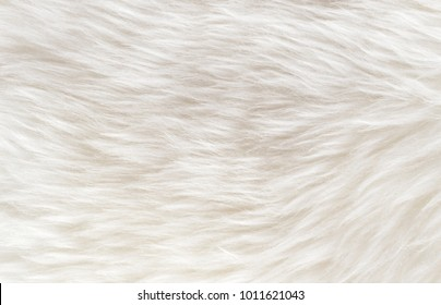 White soft wool texture background, cotton wool, light natural sheep wool, close-up texture of white fluffy fur,  wool with beige tone, fur with a delicate peach tint