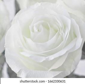 white  sparkle roses boke wedding