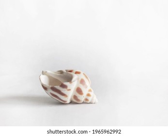 White speckled shell with bright white background
