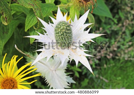 White spiky flower green centre rhs stock photo edit now 480886099 white spiky flower with green centre rhs harlow carr harrogate yorkshire england mightylinksfo