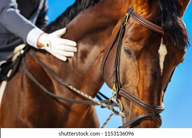 White spot. Dark-eyed race horse with white spot on his head standing submissively near his owner