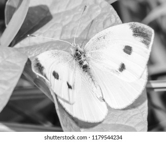 White spotted butterfly on green leaf nature photography