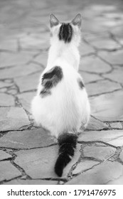 White spotted cat sitting on the stone floor. Back view. Bw photo.