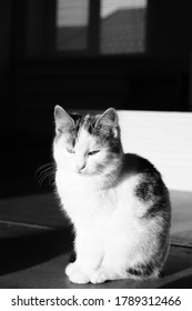 White spotted kitty sitting in the dark room. Lovely fluffy cat. BW photo