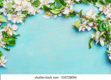 White Spring blossom on blue turquoise wooden background, top view, border. Springtime concept