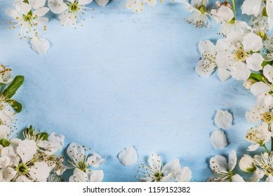 White spring cherry blossom on blue rustic