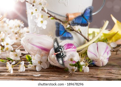 White spring flower and blue butterfly on wooden background.
