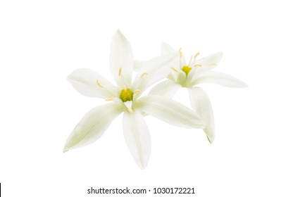 white spring flowers isolated on white background