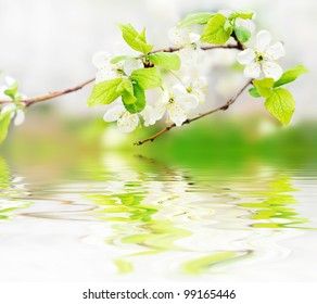 white spring flowers on a tree branch over green bokeh background on the water waves -  shallow DOF