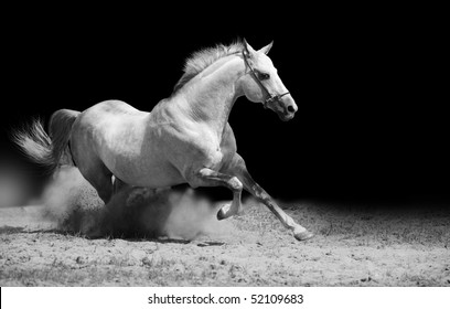 white stallion on black