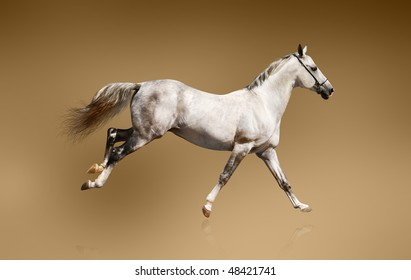 white stallion over a brown