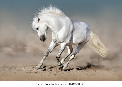 White stallion run in desert against blue sky