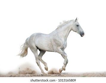 White stallion is running gallop over a white background