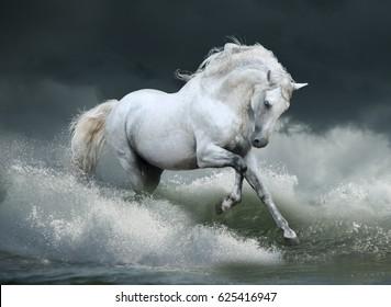 white stallion runs free in waves of the sea