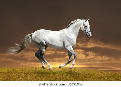 white stallion in sunset