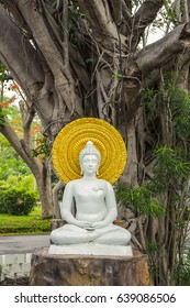 white statue buddha with dhama under the bodhi tree
