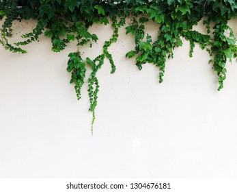 White stone wall and plants in Rishon Le Zion. Close up shot.