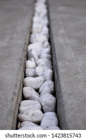White Stones in a Crevice (In a Sidewalk)