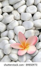 white stones with frangipani flower