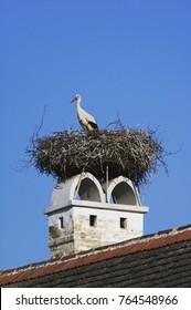 White Stork, Ciconia ciconia, adult on nest on chimney,Rust, National Park Lake Neusiedl, Burgenland, Austria, April