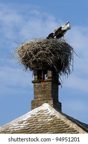 White Stork (Ciconia ciconia) in the nest.