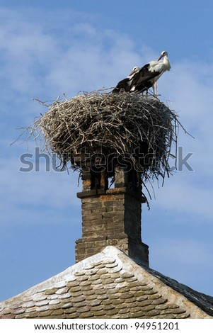White Stork (Ciconia ciconia) in the nest.