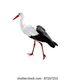 White stork isolated on white background