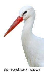 White Stork isolated on white background