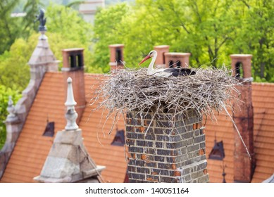 White stork nesting on the roof of an old palace