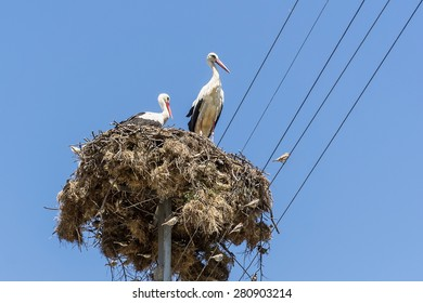 White storks nest Bulgarian village. Blue sky on background.