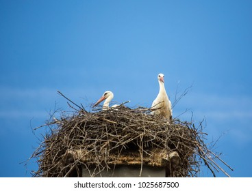 White storks sitting in its nest on a roof in Germany during summer time