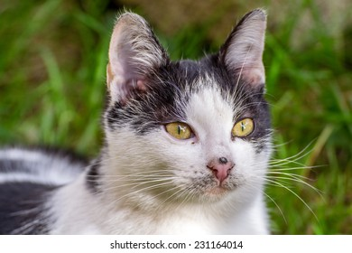 White stray cat with black spots and incredible green eyes