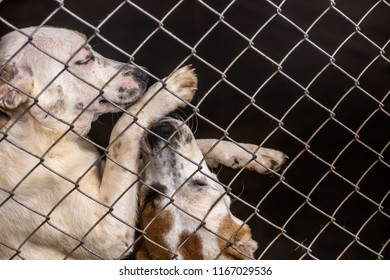 White stray dogs are playing in a cage
