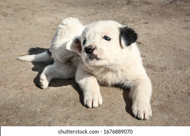 White stray puppy outdoors on sunny day. Baby animal