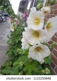 white street flower