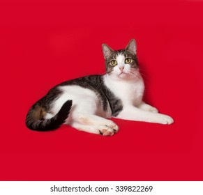 White and striped cat lying on red background