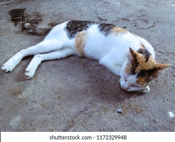 White Stripes Cat Slept Well In The Yard At Ringdikit Village, North Bali, Indonesia