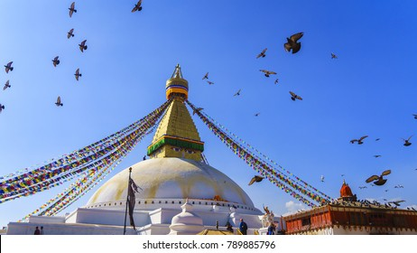 White stupa in Nepal with fly free bird in Nepal.